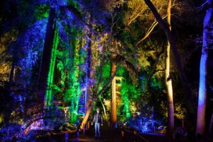 trees lit up by colorful lights in descanso gardens
