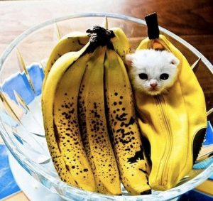 instagram banana kitty