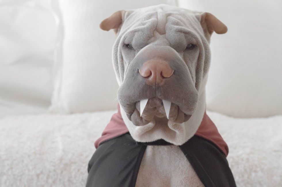 20+ Pets in Halloween Costumes That Are SO GOOD, We Just Can't Anymore