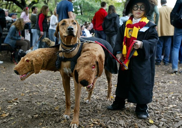 halloween dog costume - three headed dog harry potter