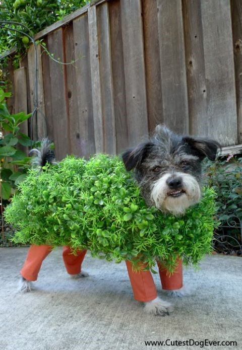 chia pet dog diy costume