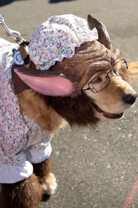 grandma wolf dog costume