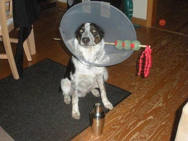 martini dog costume cone