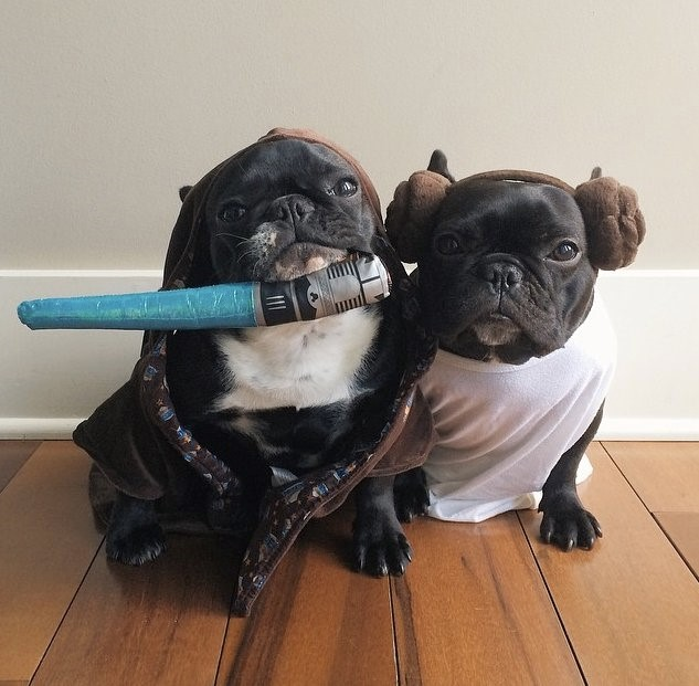 star wars pug costumes