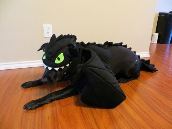 toothless dog costume
