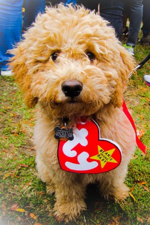 TY beanie baby dog diy costume