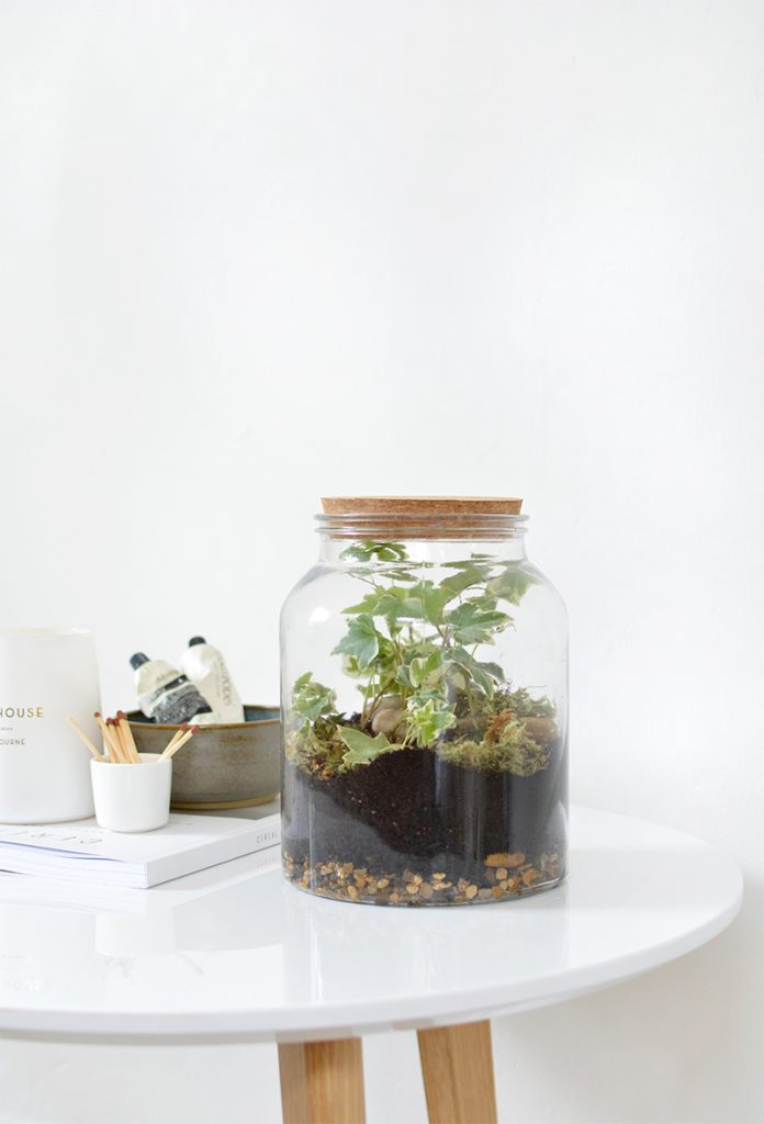 urban terrarium glass jar